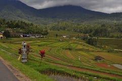 Terrazzi Bali Indonesia del riso Immagini Stock Libere da Diritti