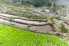 Terrazzi Batad Filippine del riso Fotografia Stock