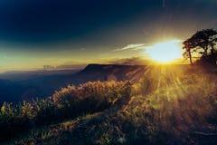 Terrazzi del fiore dell'erba sugli altopiani con il tramonto Immagine Stock