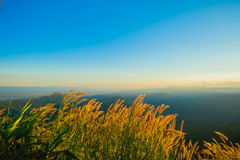 Terrazzi del fiore dell'erba sugli altopiani con il tramonto Fotografia Stock Libera da Diritti