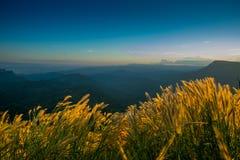 Terrazzi del fiore dell'erba sugli altopiani con il tramonto Fotografia Stock
