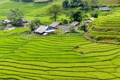 Terrazzi del giacimento del riso Fotografie Stock Libere da Diritti