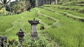 Terrazzi del giacimento del riso Immagini Stock