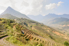 Terrazzi del giacimento del riso Fotografia Stock Libera da Diritti