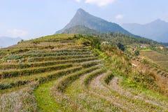 Terrazzi del giacimento del riso Fotografia Stock
