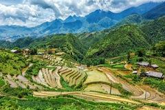 Terrazzi del giacimento del riso Vicino a Sapa, Mui Ne Immagini Stock Libere da Diritti
