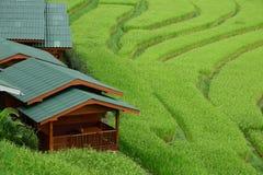 Terrazzi del giacimento del riso a Mae Klang Luang, alloggio presso famiglie Chiangmai, Tailandia Immagini Stock