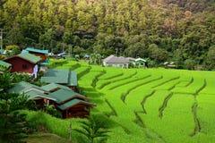 Terrazzi del giacimento del riso a Mae Klang Luang, alloggio presso famiglie Chiangmai, Tailandia Fotografie Stock Libere da Diritti