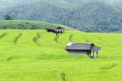 Terrazzi del riso Fotografie Stock