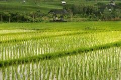 Terrazzi del riso a Bali Indonesia Fotografie Stock