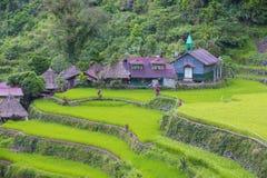 Terrazzi del riso in Banaue le Filippine fotografia stock