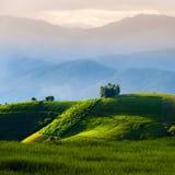 Terrazzi del riso in Chiang Mai, Tailandia Fotografie Stock