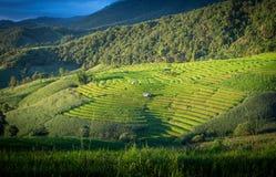 Terrazzi del riso in Chiang Mai, Tailandia Immagine Stock