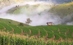 Terrazzi del riso in Chiang Mai, Tailandia Immagine Stock Libera da Diritti