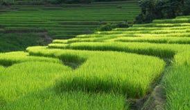 Terrazzi del riso in Chiang Mai, Tailandia Immagini Stock