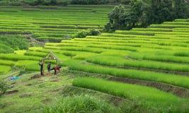Terrazzi del riso in Chiang Mai, Tailandia Fotografie Stock Libere da Diritti
