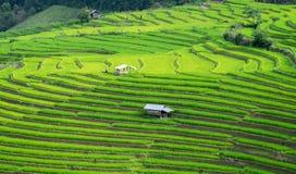 Terrazzi del riso in Chiang Mai, Tailandia Fotografia Stock