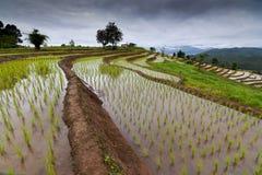 Terrazzi del riso in Chiang Mai, Tailandia Fotografia Stock Libera da Diritti
