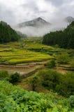 Terrazzi del riso del villaggio di Youtsuya, Giappone Fotografia Stock Libera da Diritti