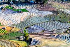 Terrazzi del riso della gente etnica di H'Mong in Northenr Vietnam alla stagione di riempimento dell'acqua (maggio 2015) Fotografia Stock
