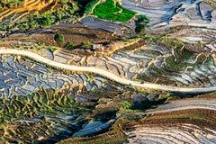 Terrazzi del riso della gente etnica di H'Mong in Northenr Vietnam alla stagione di riempimento dell'acqua (maggio 2015) Immagine Stock Libera da Diritti