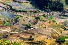 Terrazzi del riso della gente etnica di H'Mong in Northenr Vietnam alla stagione di riempimento dell'acqua (maggio 2015) Fotografie Stock Libere da Diritti