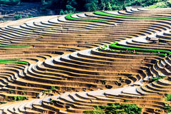 Terrazzi del riso della gente etnica di H'Mong in Sapa, Laocai, Vietnam alla stagione di riempimento dell'acqua (maggio 2015) Immagini Stock