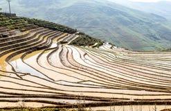 Terrazzi del riso della gente etnica di H'Mong in Sapa, Laocai, Vietnam alla stagione di riempimento dell'acqua (maggio 2015) Fotografia Stock Libera da Diritti