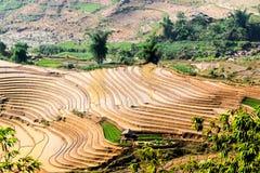 Terrazzi del riso della gente etnica di H'Mong in Sapa, Laocai, Vietnam alla stagione di riempimento dell'acqua (maggio 2015) Immagini Stock Libere da Diritti