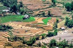 Terrazzi del riso della gente etnica di H'Mong in Sapa, Laocai, Vietnam alla stagione di riempimento dell'acqua (maggio 2015) Immagine Stock