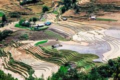 Terrazzi del riso della gente etnica di H'Mong in Sapa, Laocai, Vietnam alla stagione di riempimento dell'acqua (maggio 2015) Fotografie Stock