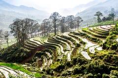 Terrazzi del riso della gente etnica di H'Mong in Sapa, Laocai, Vietnam alla stagione di riempimento dell'acqua (maggio 2015) Immagine Stock Libera da Diritti