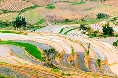 Terrazzi del riso della gente etnica di H'Mong in Sapa, Laocai, Vietnam alla stagione di riempimento dell'acqua (maggio 2015) Fotografia Stock