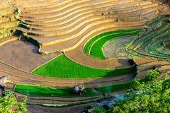 Terrazzi del riso della gente etnica di H'Mong in Sapa, Laocai, Vietnam alla stagione di riempimento dell'acqua (maggio 2015) Fotografie Stock Libere da Diritti