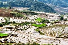 Terrazzi del riso della gente etnica di H'Mong in Y Ty, Laocai, Vietnam alla stagione di riempimento dell'acqua (maggio 2015) Fotografia Stock