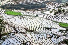 Terrazzi del riso della gente etnica di H'Mong in Y Ty, Laocai, Vietnam alla stagione di riempimento dell'acqua (maggio 2015) Fotografia Stock Libera da Diritti