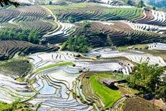 Terrazzi del riso della gente etnica di H'Mong in Y Ty, Laocai, Vietnam alla stagione di riempimento dell'acqua (maggio 2015) Immagine Stock Libera da Diritti