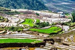 Terrazzi del riso della gente etnica di H'Mong in Y Ty, Laocai, Vietnam alla stagione di riempimento dell'acqua (maggio 2015) Fotografie Stock
