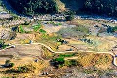 Terrazzi del riso della gente etnica di H'Mong in Y Ty, Laocai, Vietnam alla stagione di riempimento dell'acqua (maggio 2015) Fotografie Stock Libere da Diritti