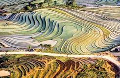 Terrazzi del riso della gente etnica di H'Mong in Y Ty, Laocai, Vietnam alla stagione di riempimento dell'acqua (maggio 2015) Immagini Stock