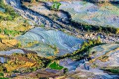 Terrazzi del riso della gente etnica di H'Mong in Y Ty, Laocai, Vietnam alla stagione di riempimento dell'acqua (maggio 2015) Immagini Stock Libere da Diritti