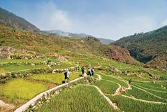 Terrazzi del riso delle Filippine Fotografie Stock