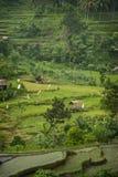 Terrazzi del riso di Bali Immagini Stock