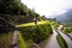 Terrazzi del riso di Banaue, Filippine Fotografie Stock Libere da Diritti