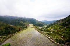 Terrazzi del riso di Banaue, Filippine Immagine Stock