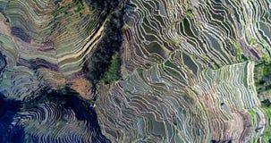Terrazzi del riso di Hani Fotografie Stock