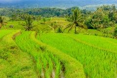 Terrazzi del riso di Jatiluwih, Bali, Indonesia Fotografie Stock