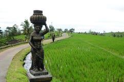 Terrazzi del riso di Jatiluwih in Tabanan, Bali, Indonesia immagini stock