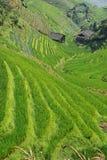 Terrazzi del riso di LongJi (Cina) nella fine dell'estate Fotografie Stock