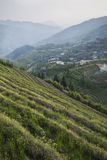 Terrazzi del riso di Longsheg (Cina) Fotografia Stock Libera da Diritti